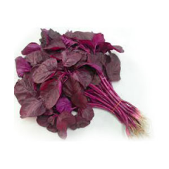 local red spinach-bayam merah